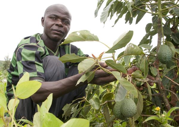 Clinton Foundation, CDHI, fruit tree growing, rwanda.
