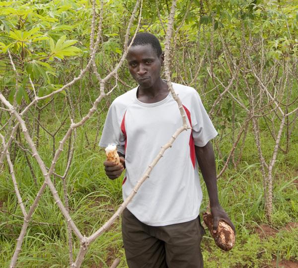 Clinton Foundation, CDHI, casava growing, rwanda.