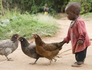 c11-Chicken_Boy_Walk_10-01_497_ep_plpp_16x21.jpg